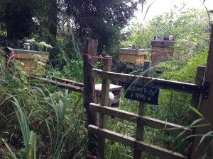 Welcome to the Apiary