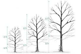 Formative Pruning